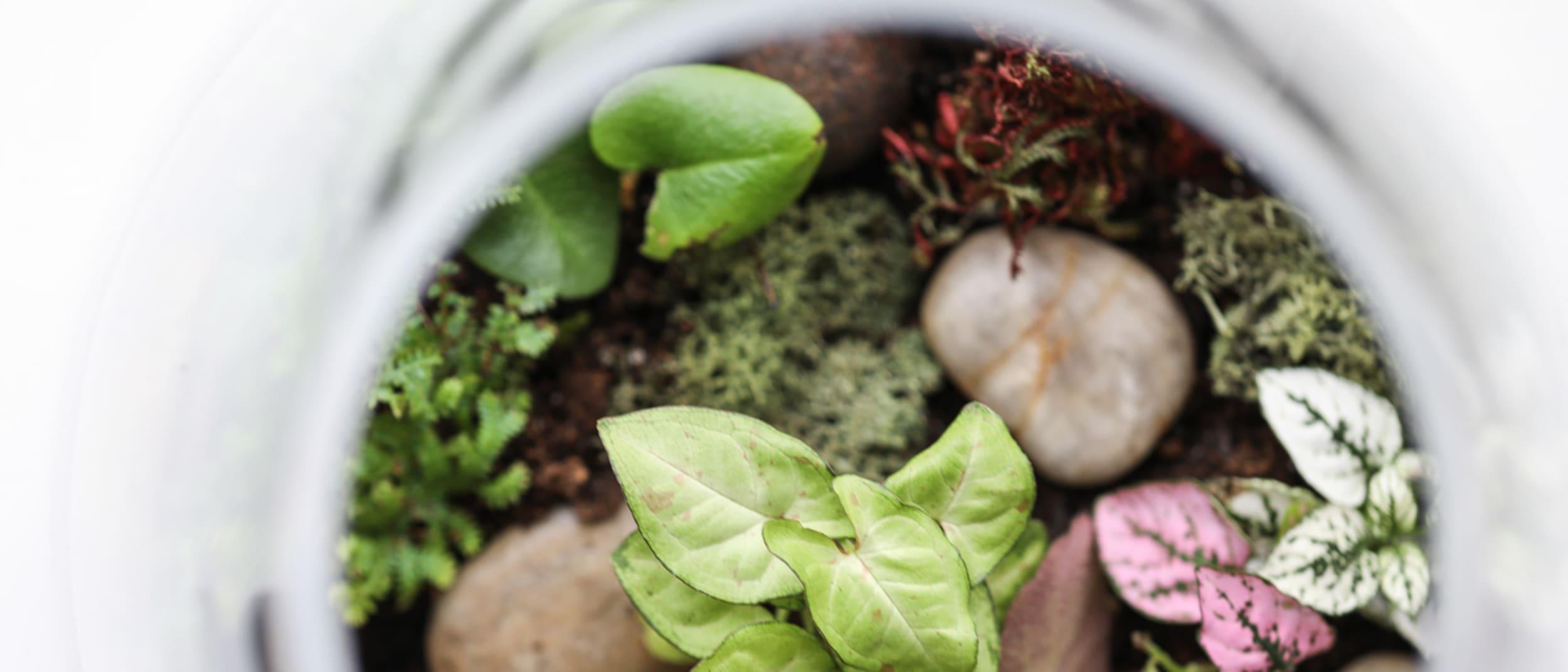 Gro Urban Oasis talk terrariums