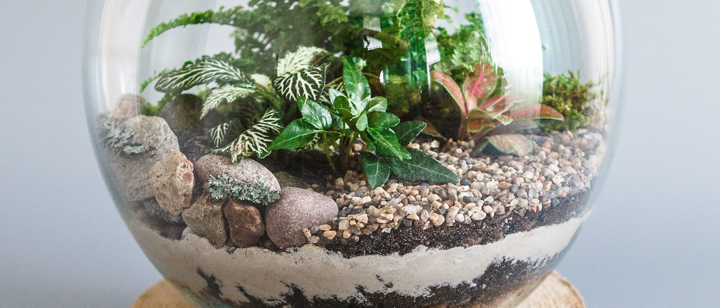 Terrarium workshops with Gro Urban Oasis