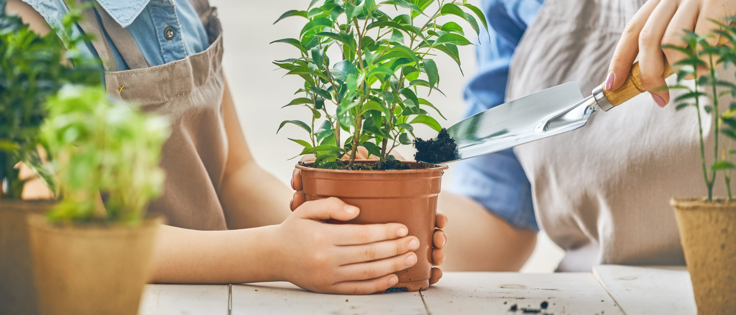 Personalise and pot a plant for Dad this Father's Day
