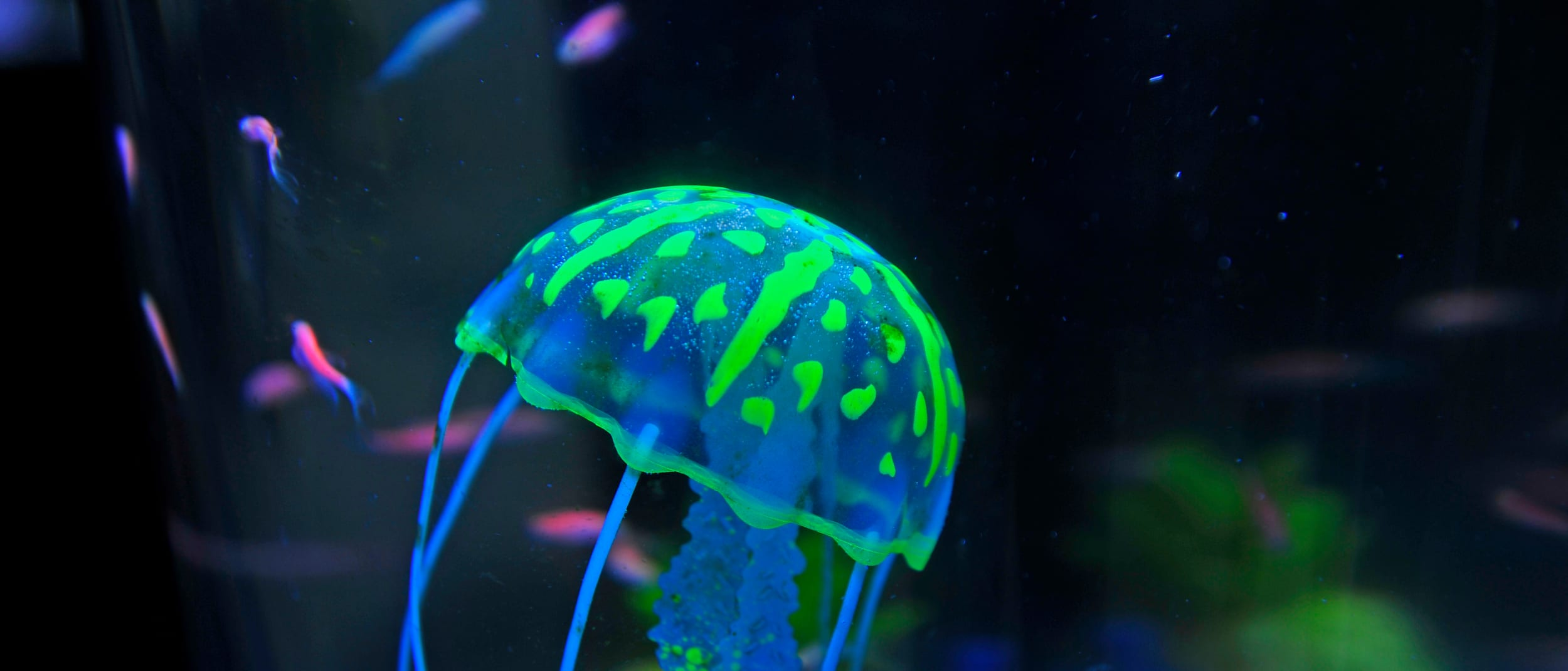 DIY pet jellyfish