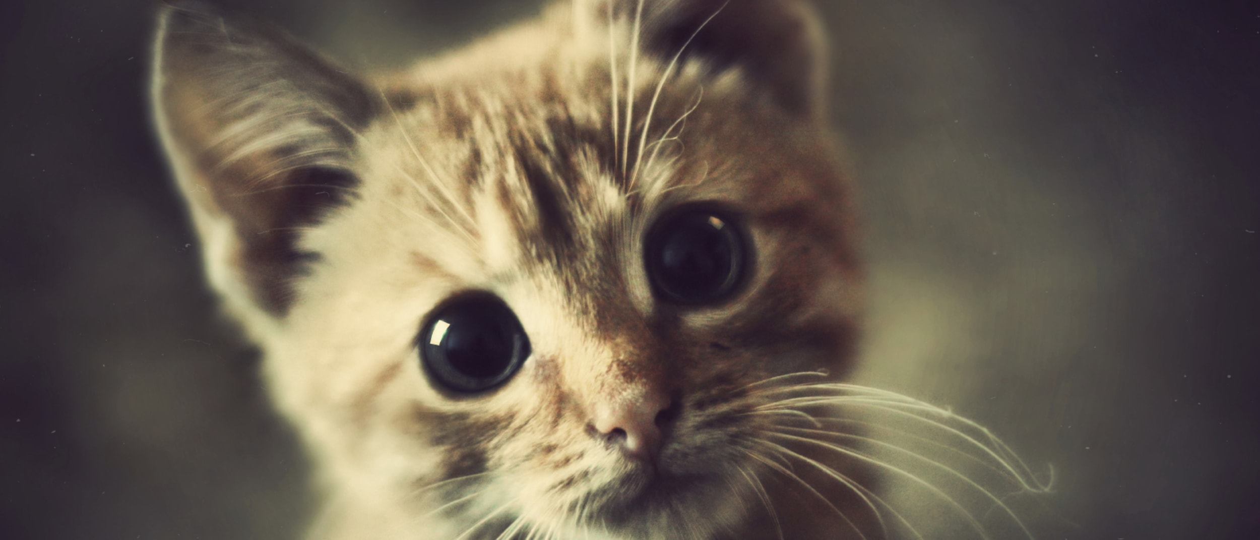 Saving Cats Trivia Night