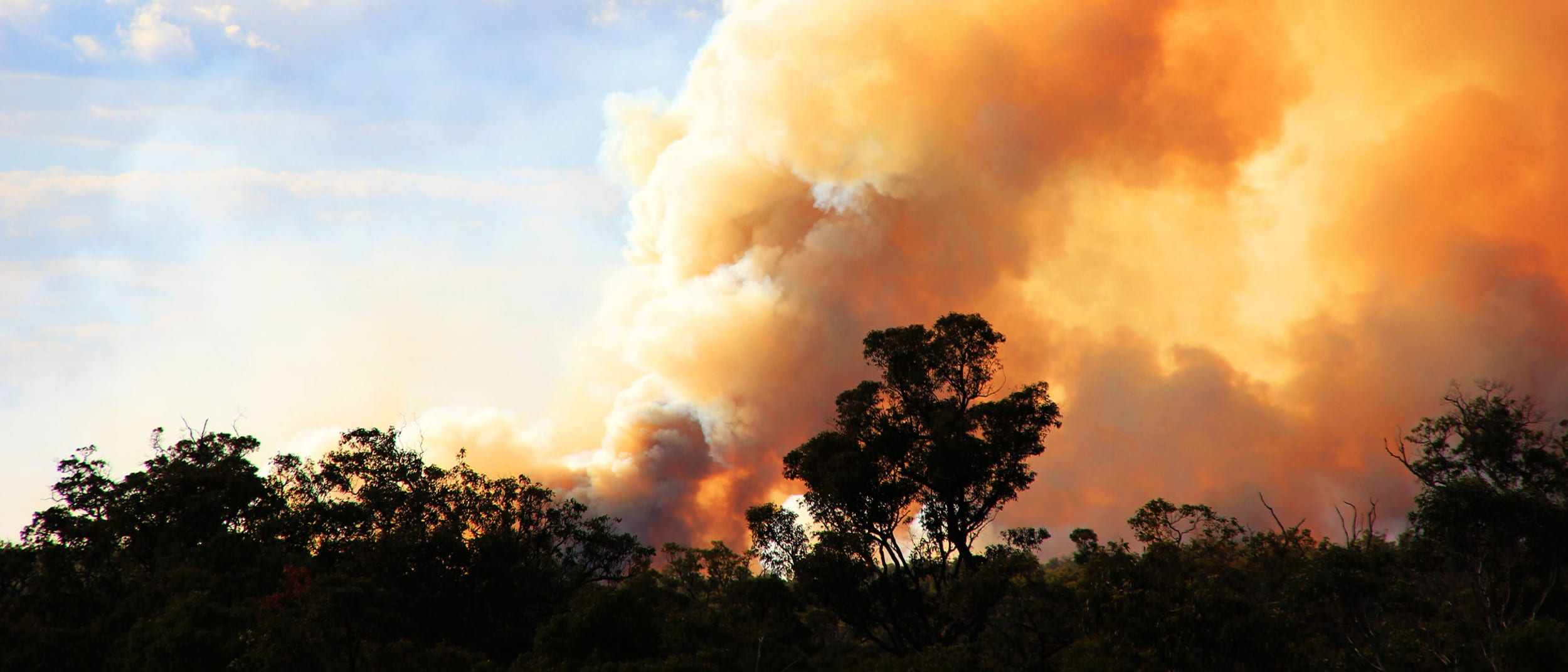 Support for the Australian bushfire appeals