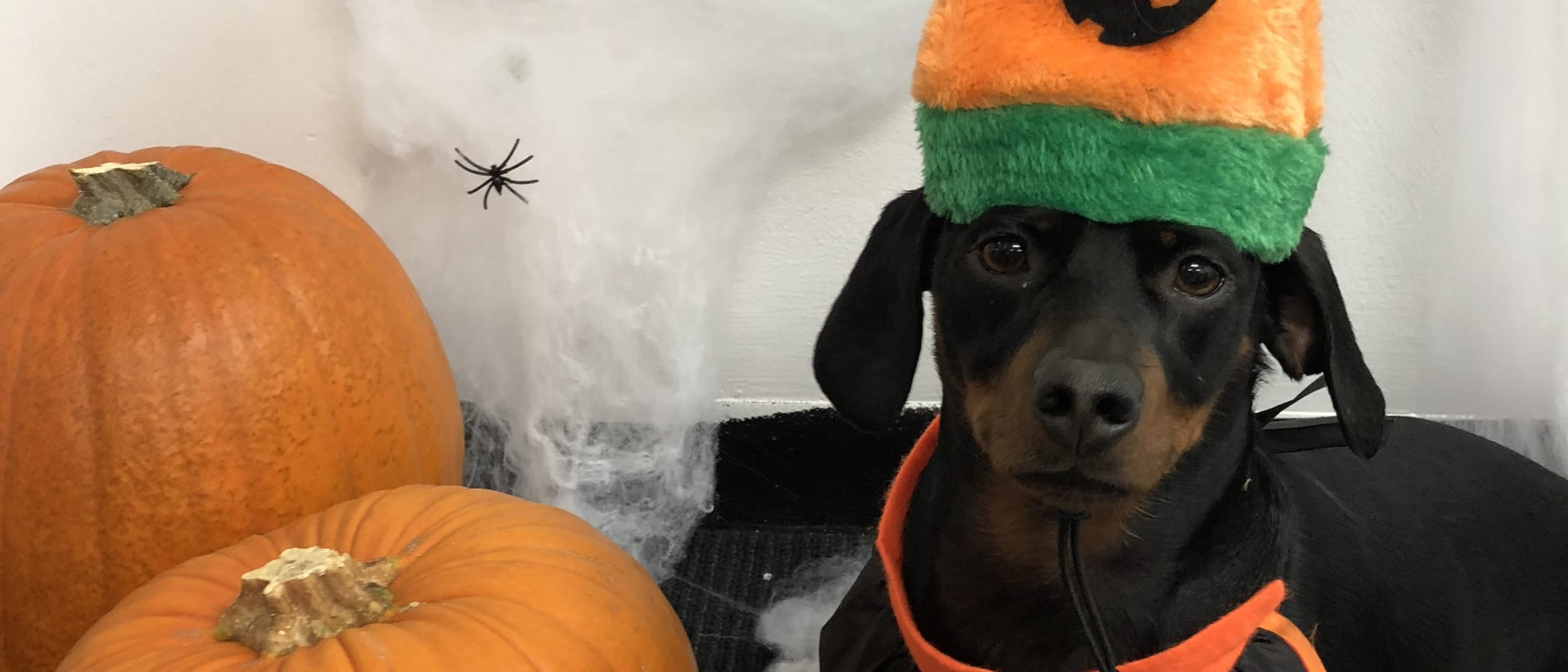 Spooky Pooch! Halloween dog dress up competition