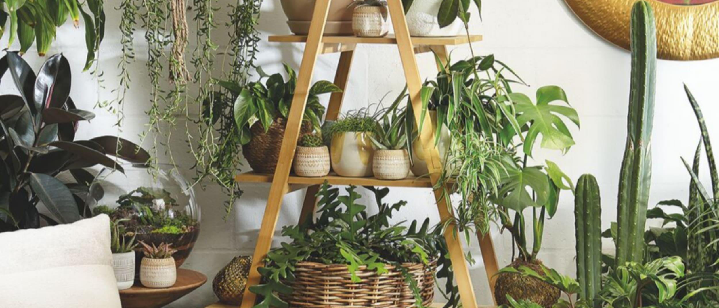 Gro Urban Oasis: Live the lush plant life at Gro