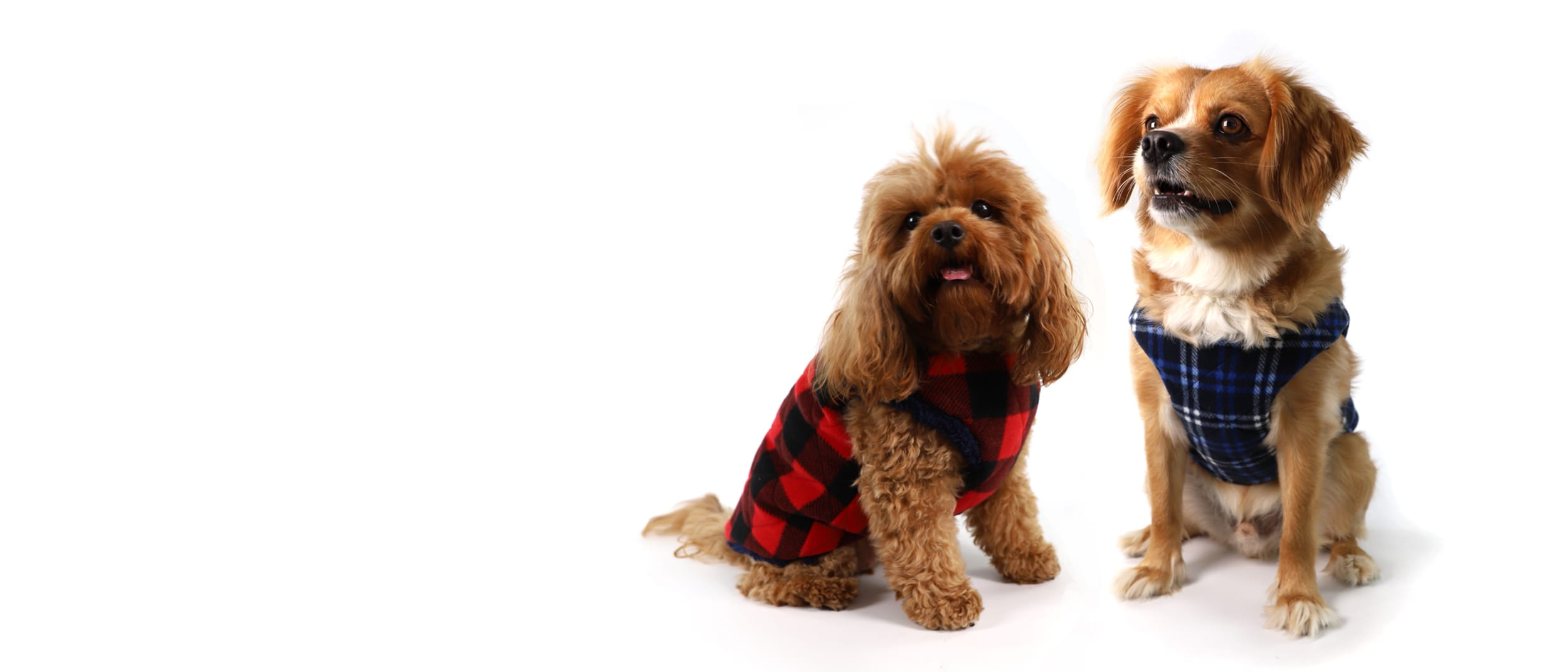 Lowes: Doggy Puffer & Quilted Vests
