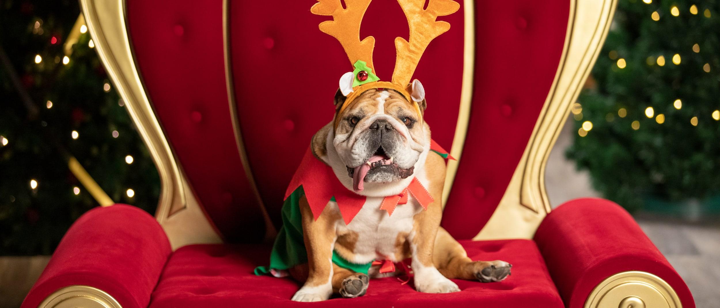 Pet photography: Santa photos with the whole family