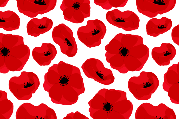 Visit the Anzac Day poppy display