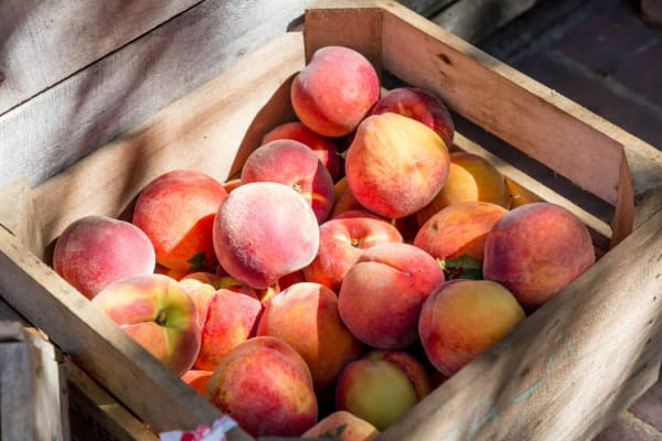 Your Aussie stone fruit guide