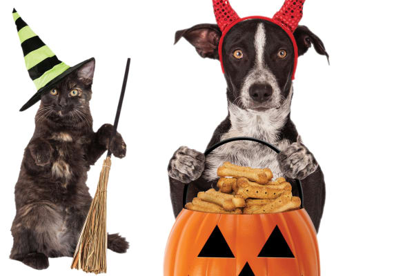 Pets Domain: Halloween sale