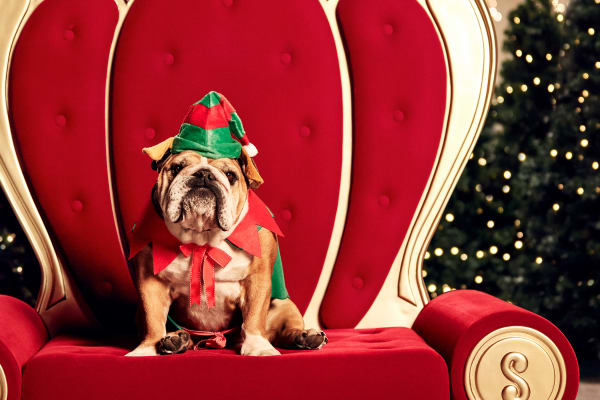 Pet photos with Santa at Westfield Coomera