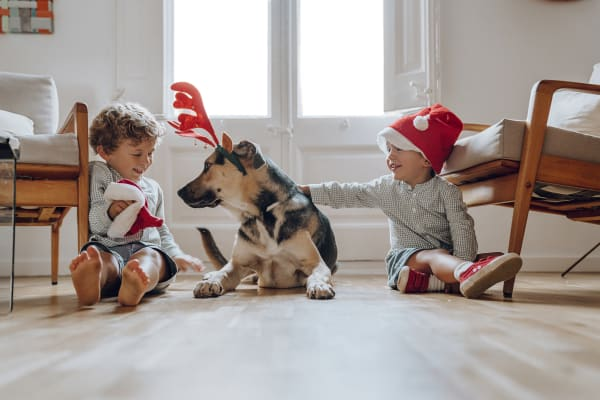 Gifts ideas for pets: how to give them a 'pawsome' Christmas