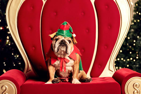 Best pet gifts for Christmas