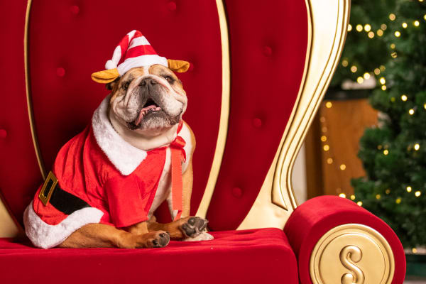 Christmas outfits for your pet's Santa photo