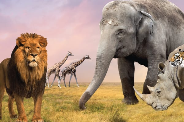 Lion Safari - July School Holidays