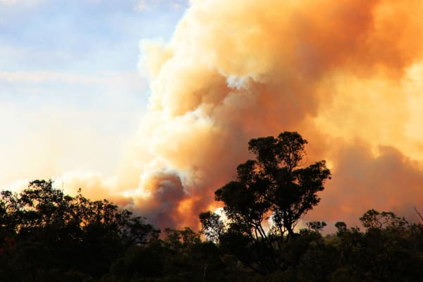 Support the Australian bushfire appeals