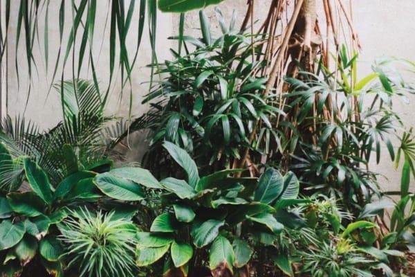 Go Urban Oasis: Lush plant spring range
