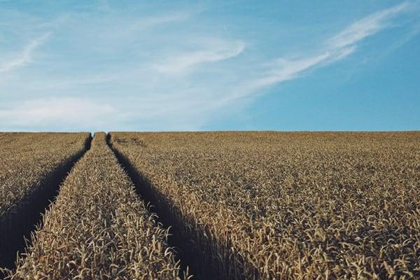 Tutti Frutti: Fiver for a Farmer