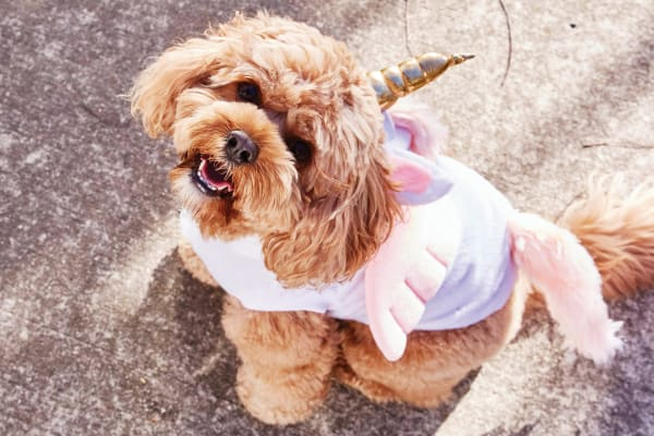 Trick or treat: dog Halloween costumes