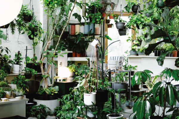 Indoor gardening for young buds with The Plant Society