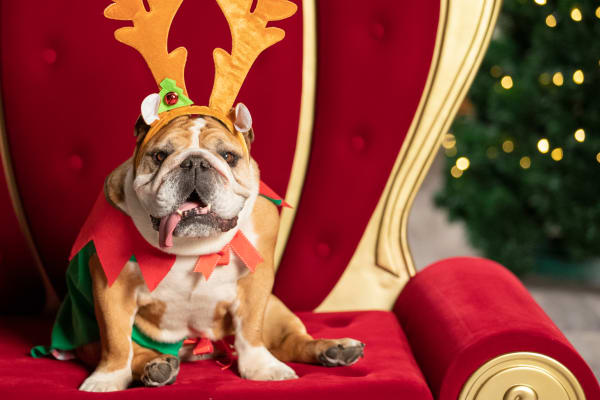 Pet photography: Santa photos with the whole family