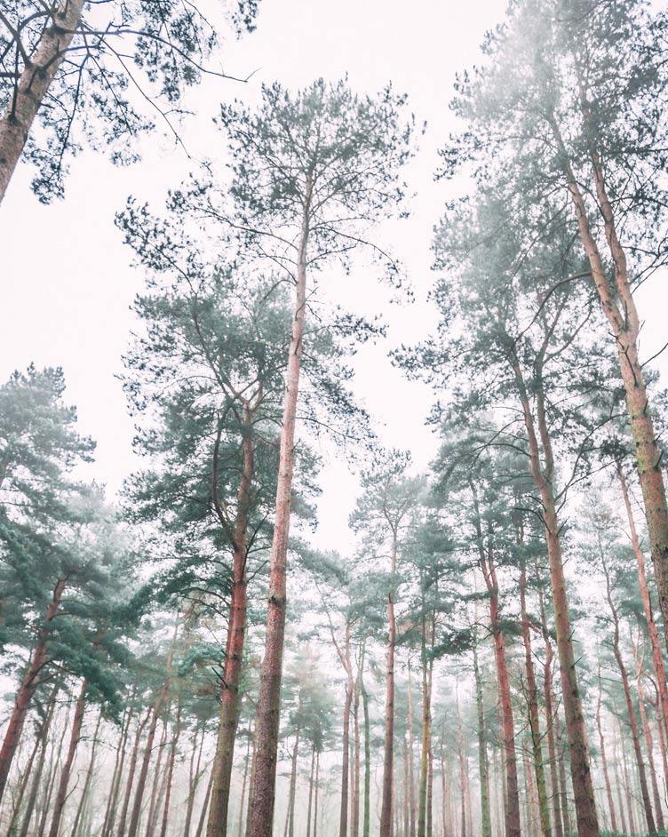 Wald bei Regen erleben