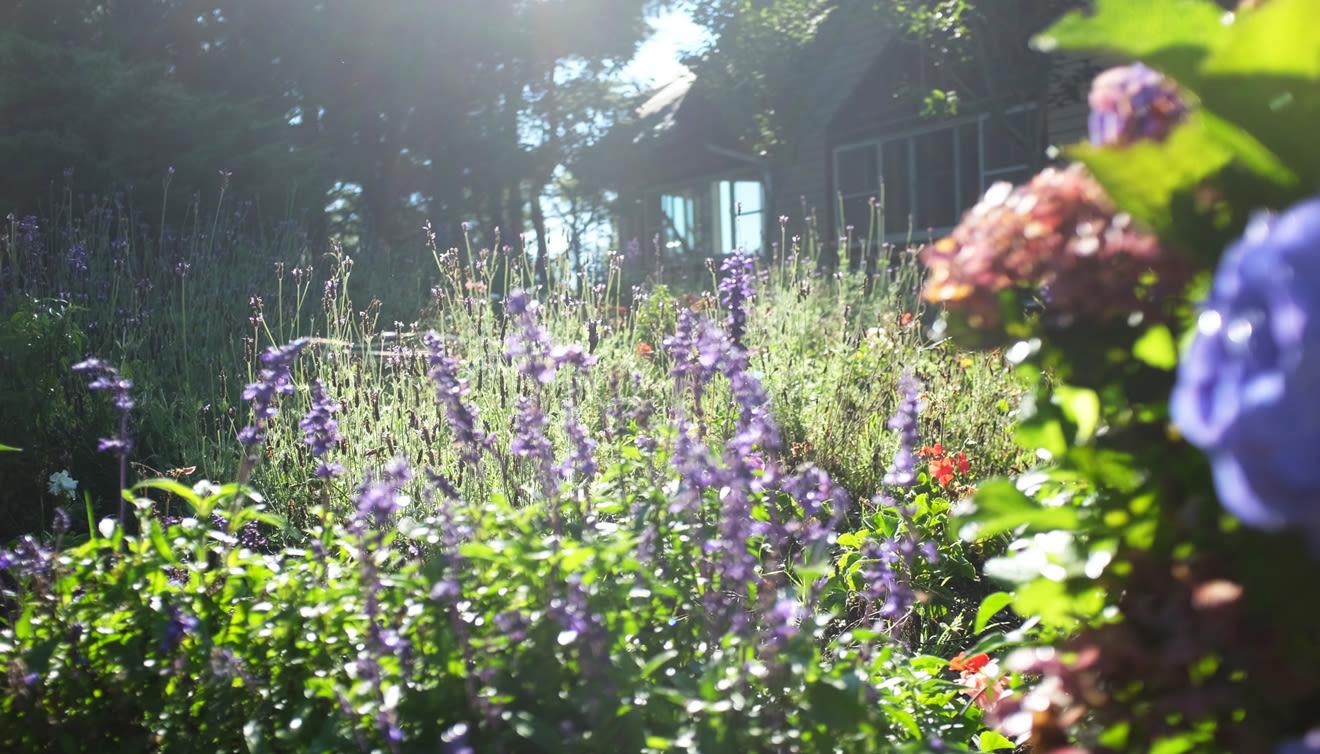 Natur im Frühling Teaser