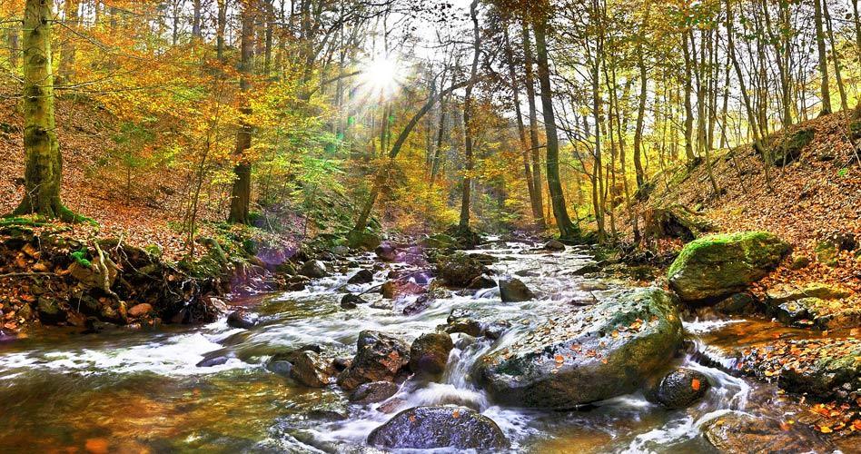 Fluss im Harz