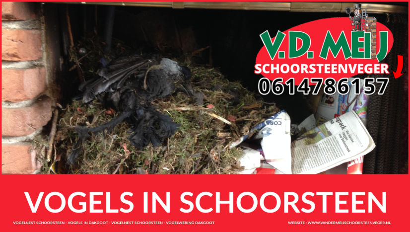 Vogelnest Verwijderen Service bij last van vogels in schoorsteen Zuid-Holland