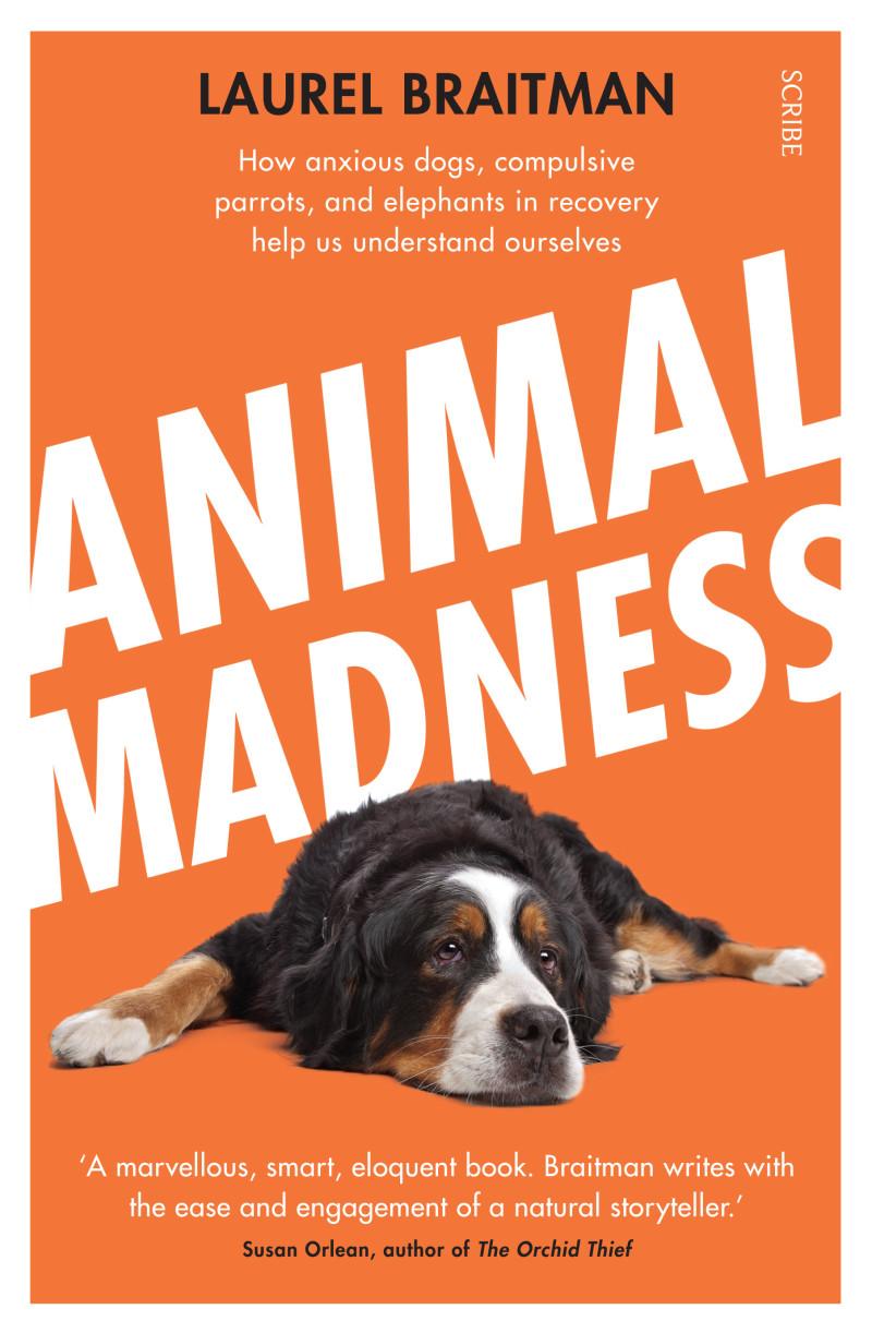 Animal Madness Book Scribe Uk