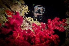 Underwater-Environment-scuba-dive-argentina