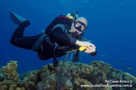 Roger Fligler buceando en Bonaire