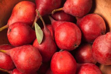 1752_red_pears-178.jpg