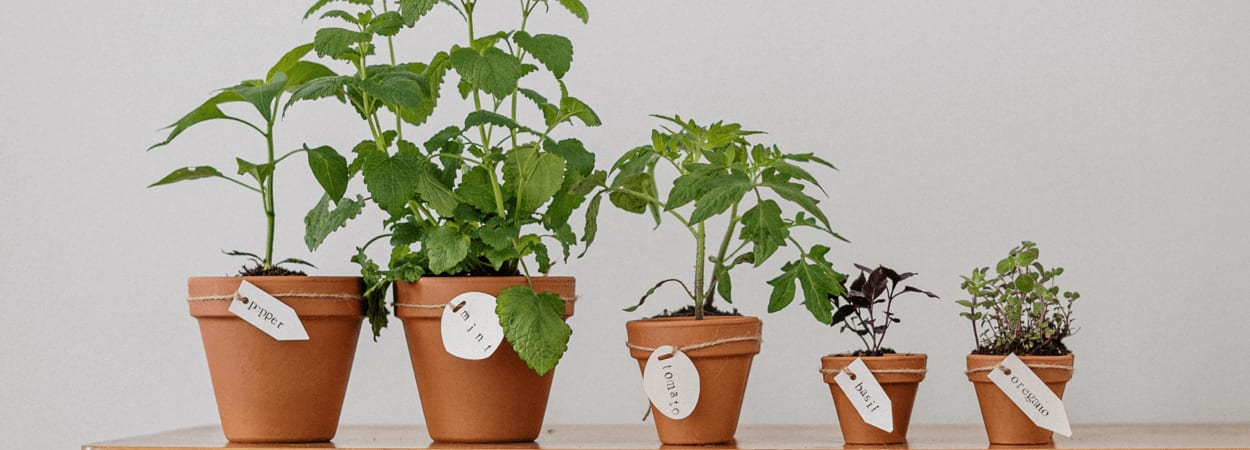 Lancez vous à votre compte en devenant jardinier freelance