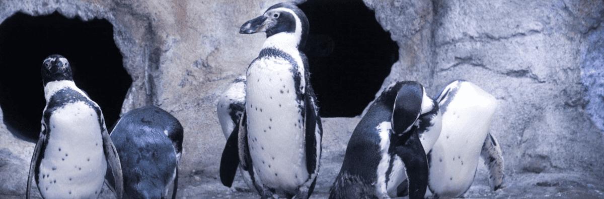 Penguins Standing at the Aquarium of Niagara Falls