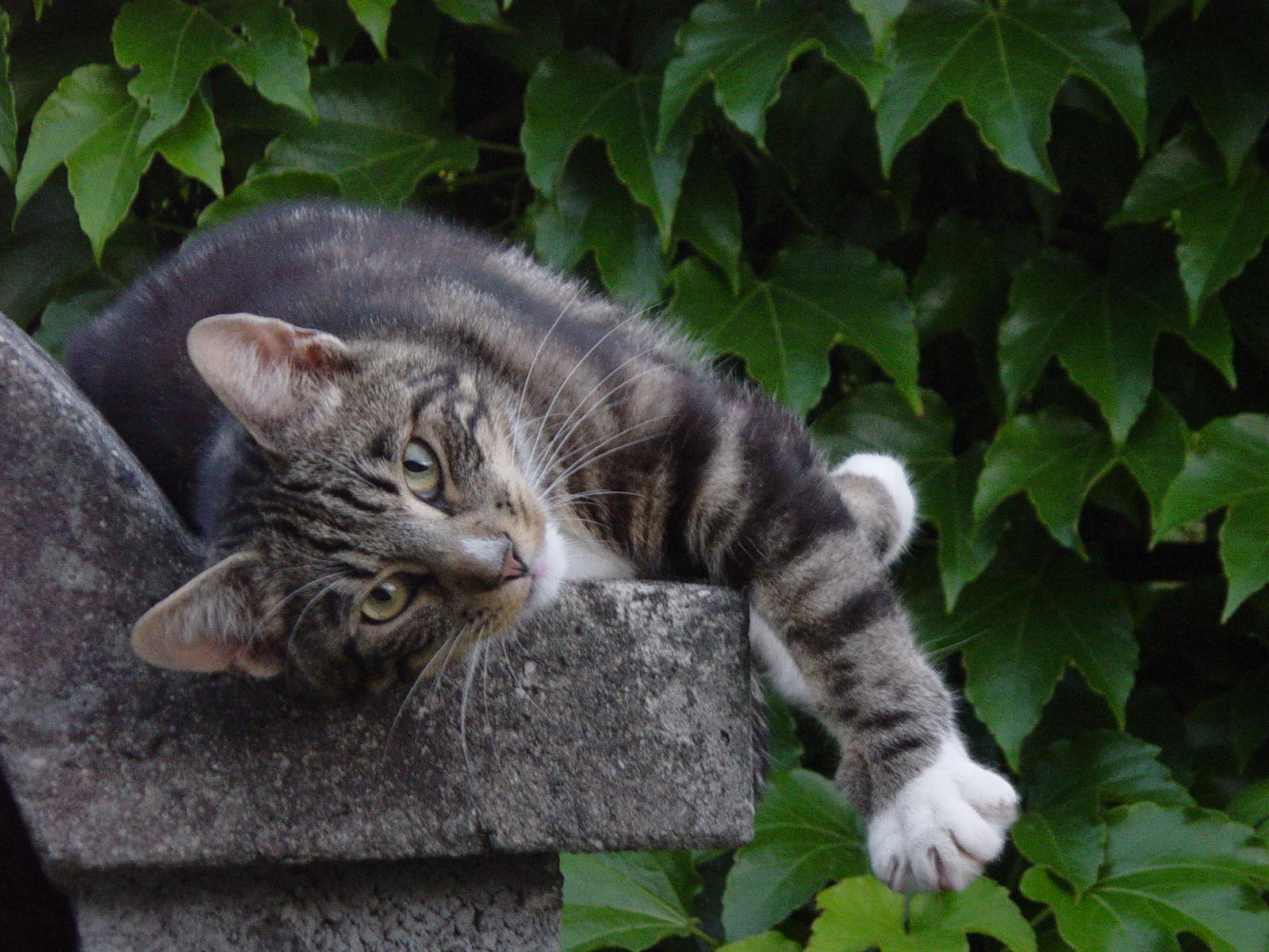Our tom cat in the garden