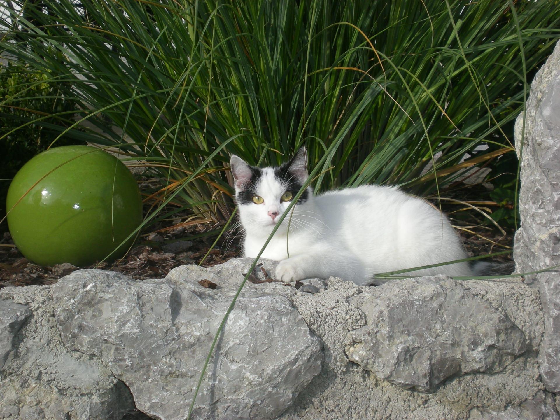Unsere Katze Mimi