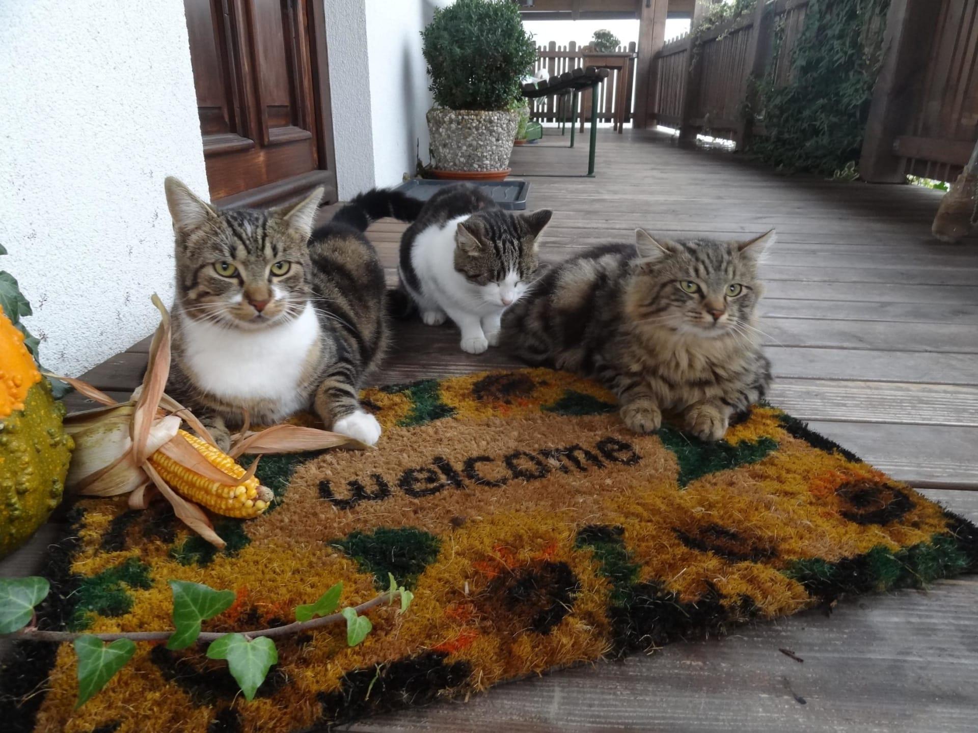Biohof Haunschmid-Hauskatzen