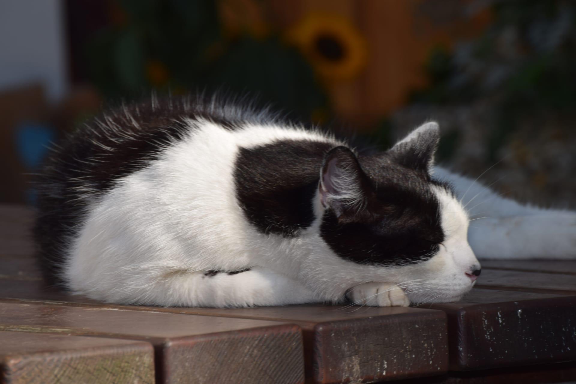 Gästezimmer Weiß - Katzer Strolchi