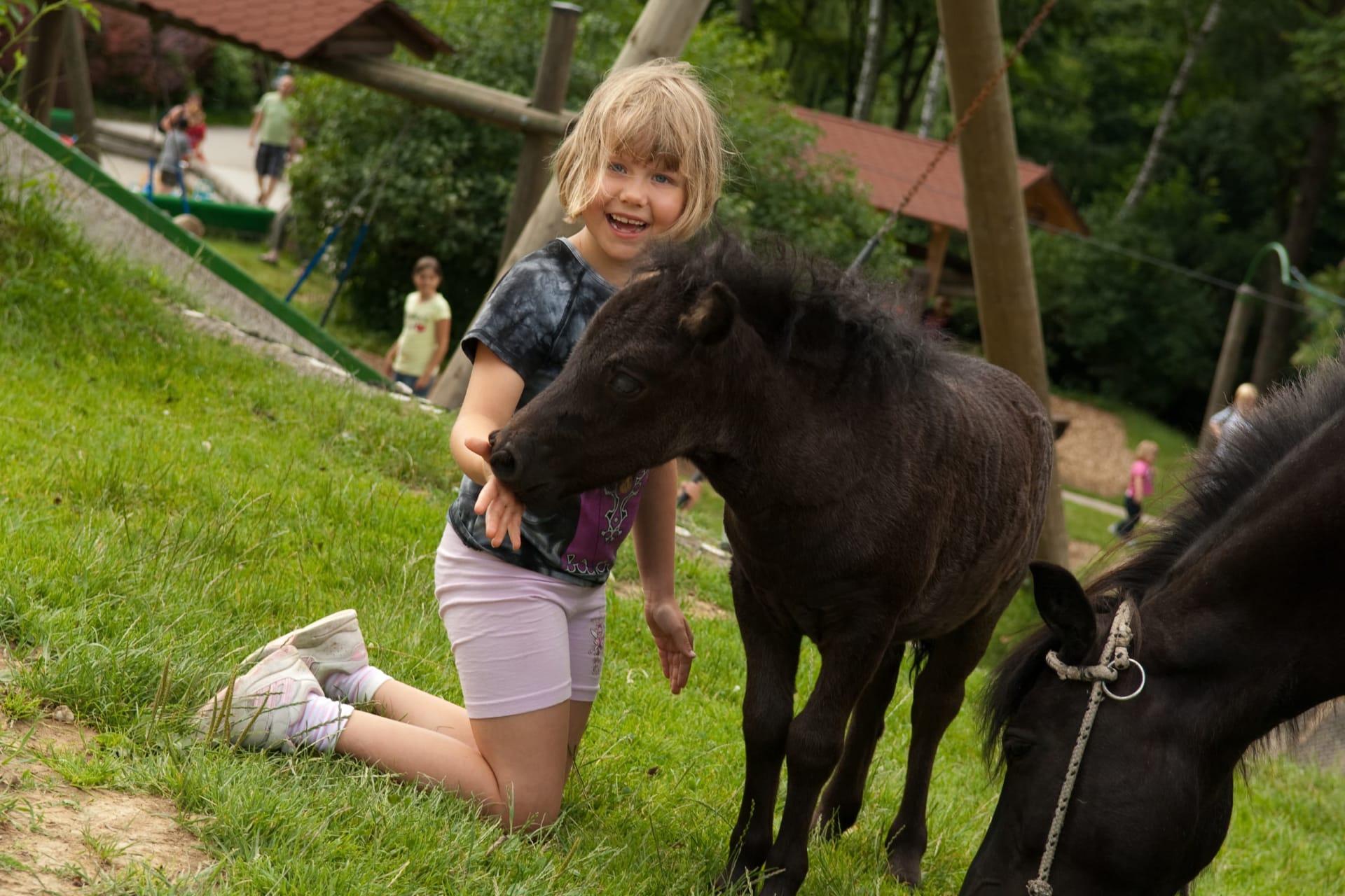 Die Hochrieß - Ponys