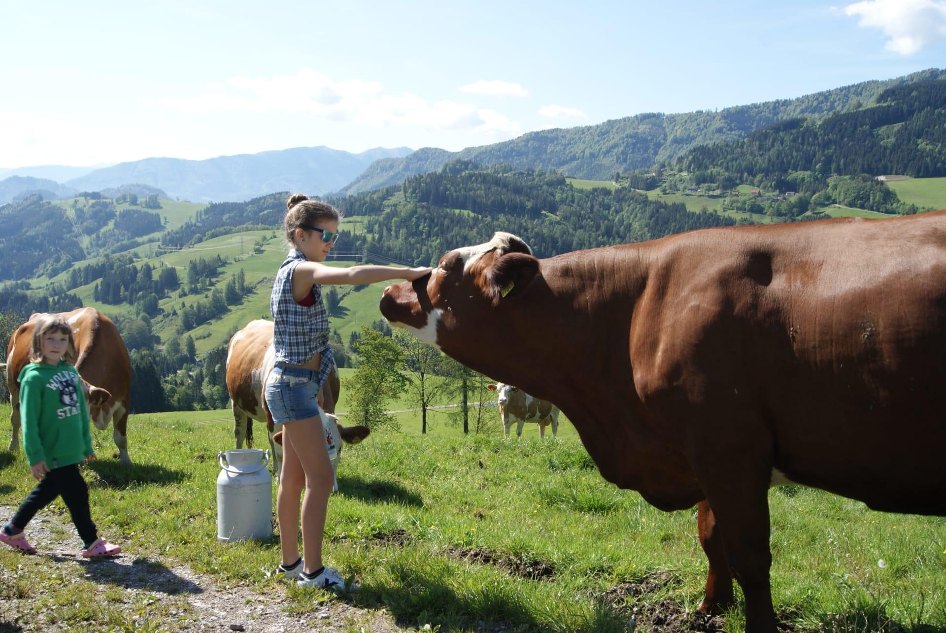 die Kuh Zina
