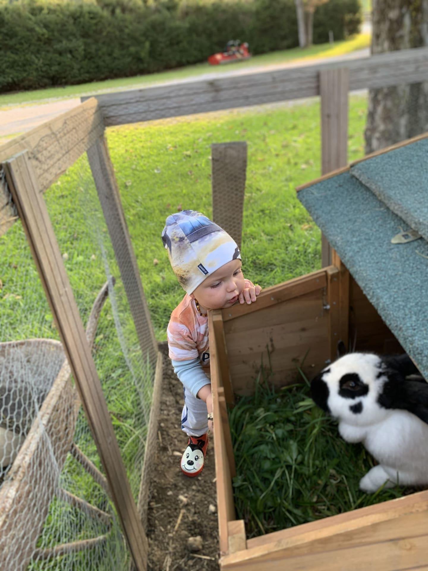 Ziegen und Hasen