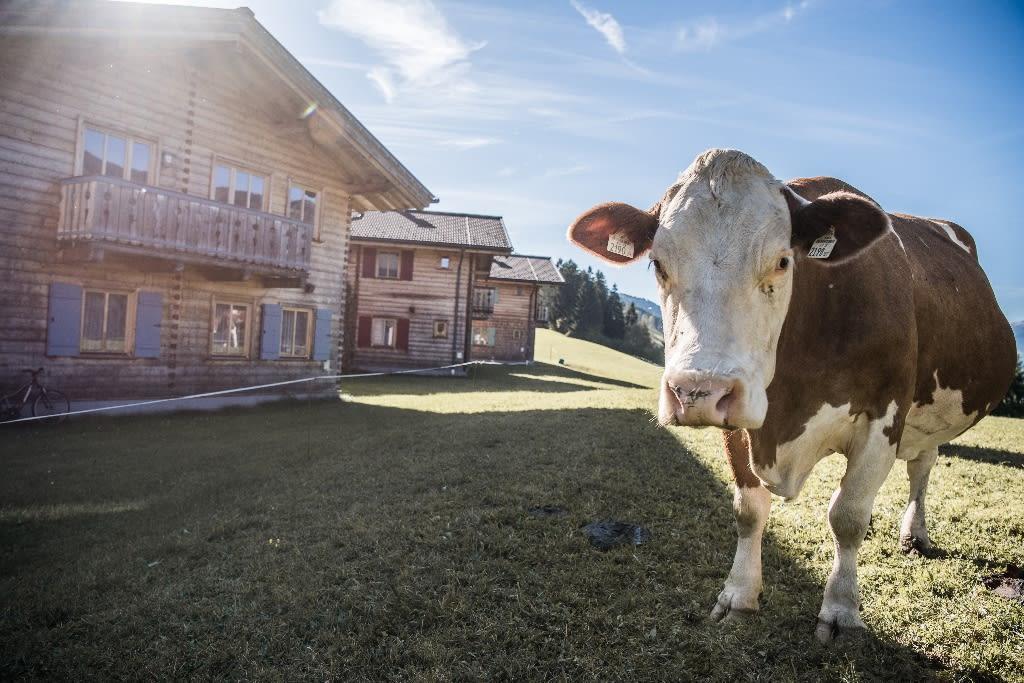 Urlaub am Bauernhof Ferienhof Oberreit