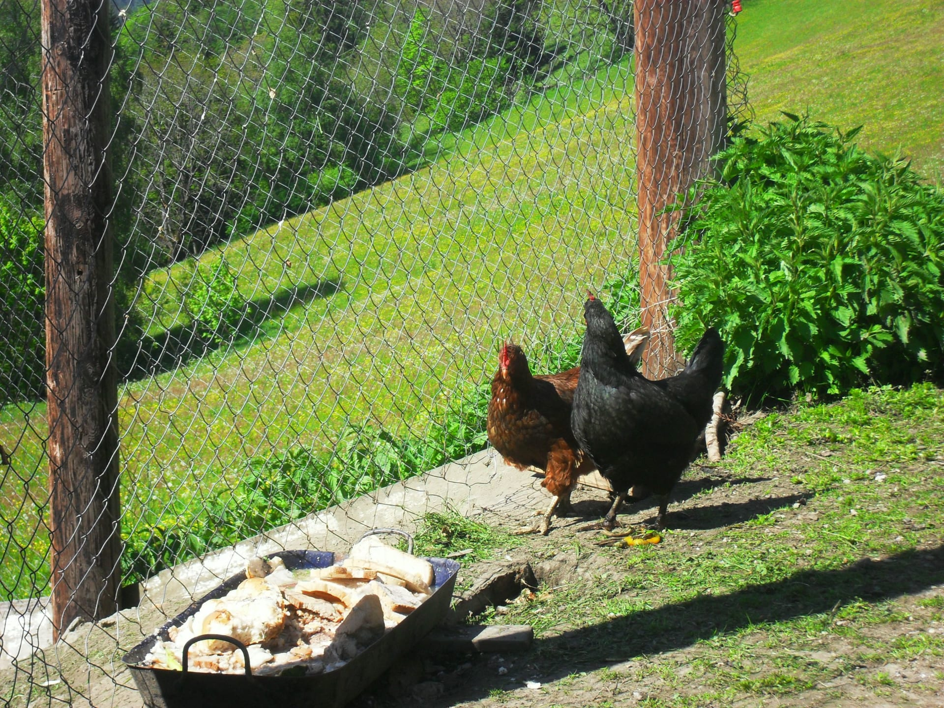 unsere Eierproduzenten