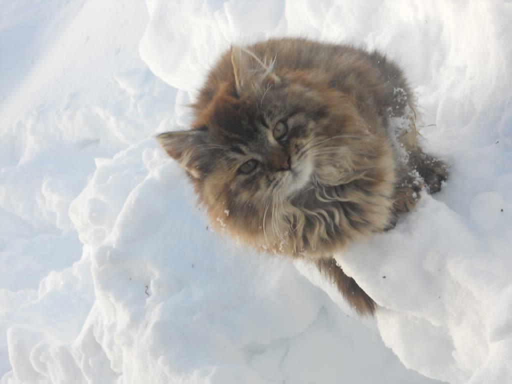 Katzenkind im Schnee