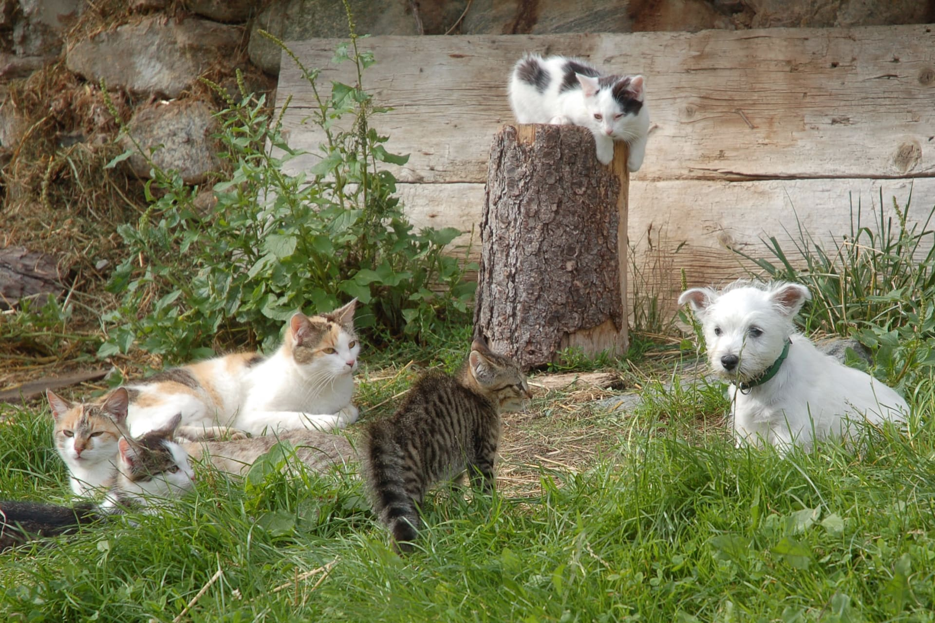 Viele Tiere bei uns am Hof