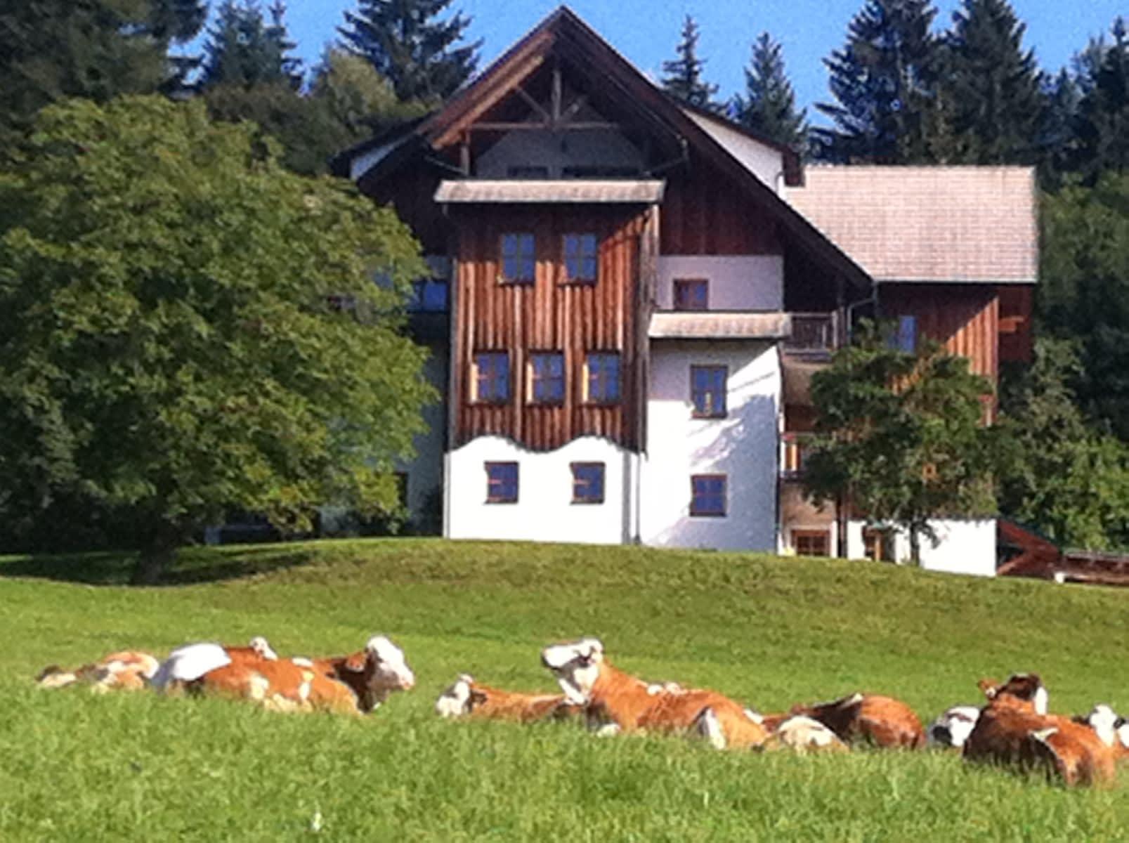 Unsere Rinder auf der Weide