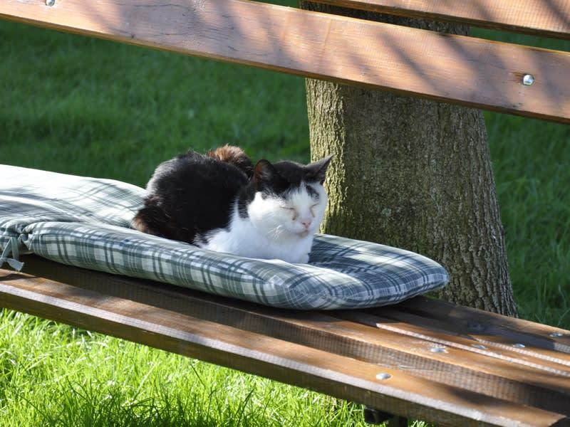 Unsere Katze zeigt vor, wie Enspannung funktioniert
