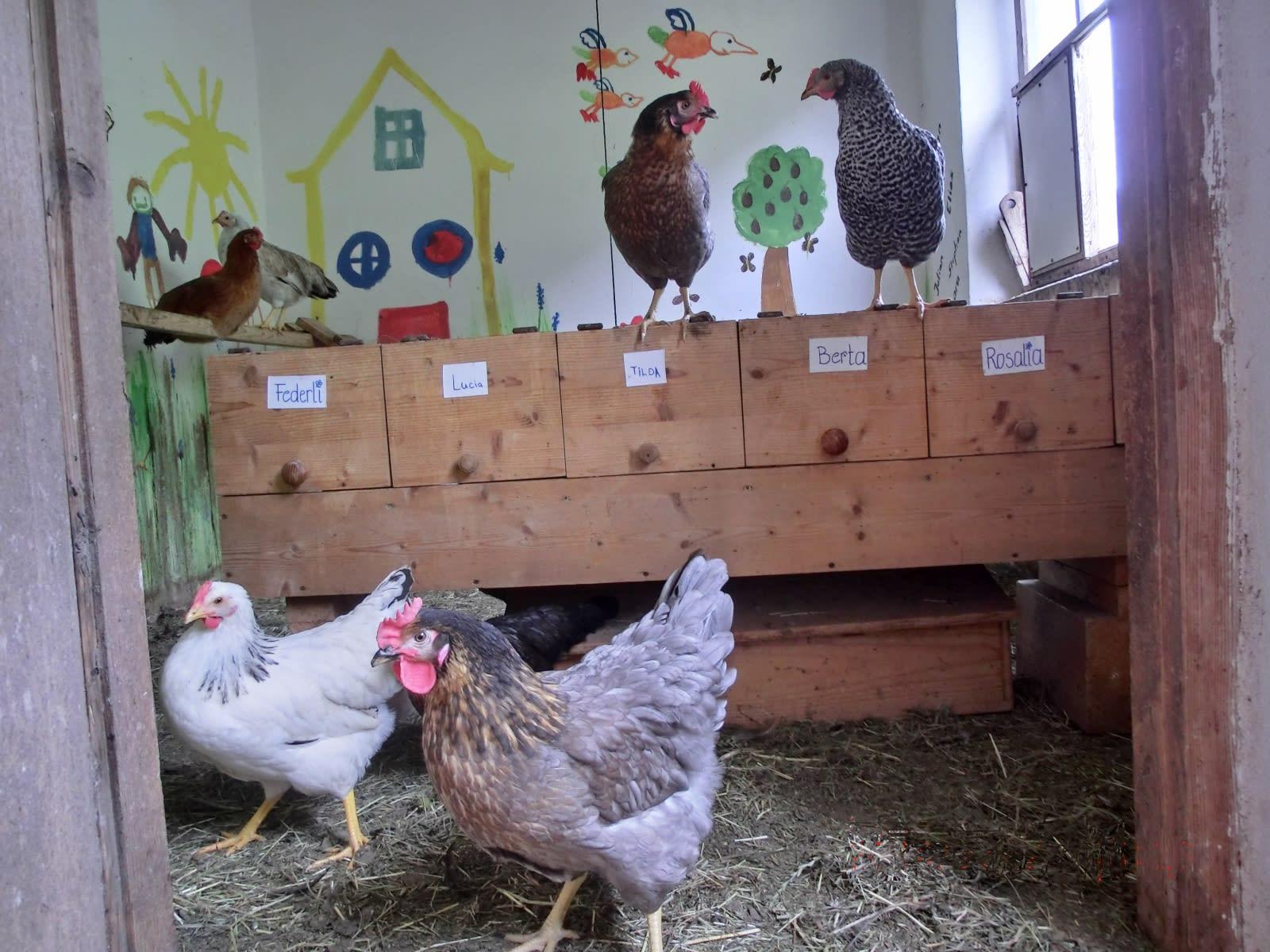 Die bunte Hühnerschar