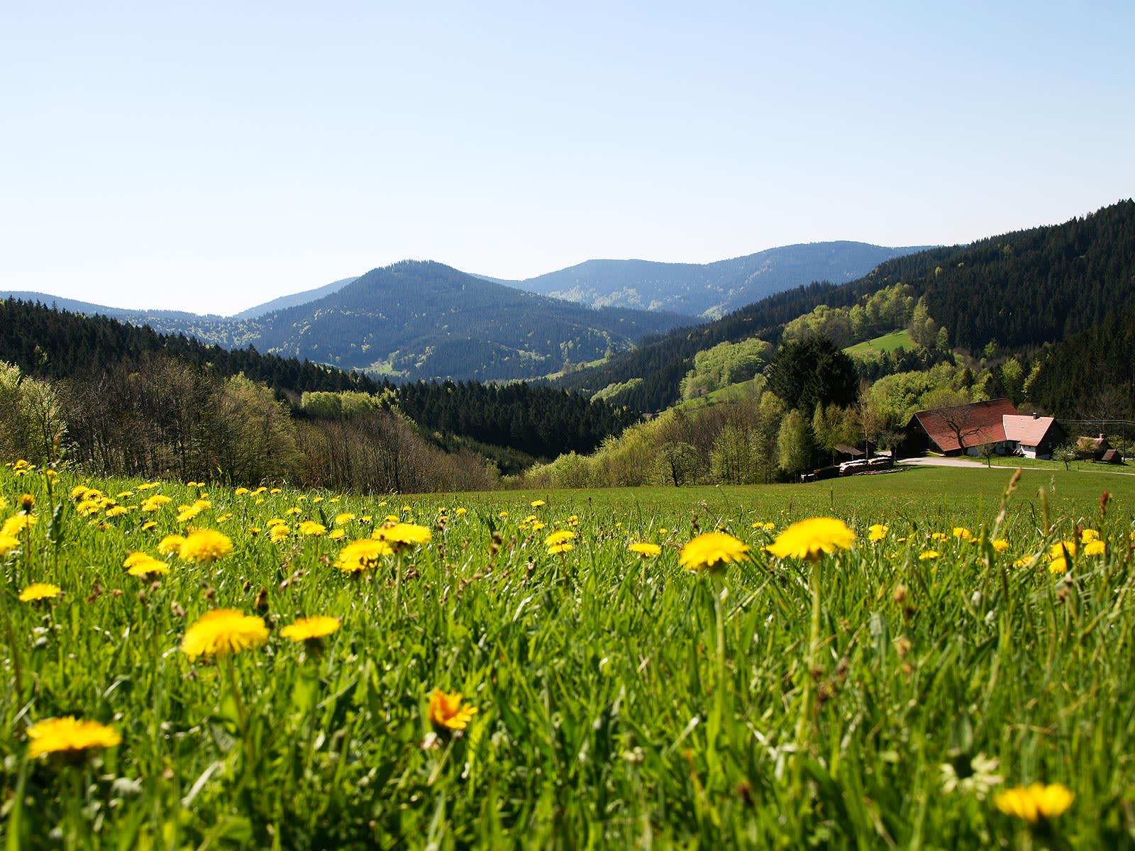 Adlerbad Spar Woche - 7 Übernachtungen