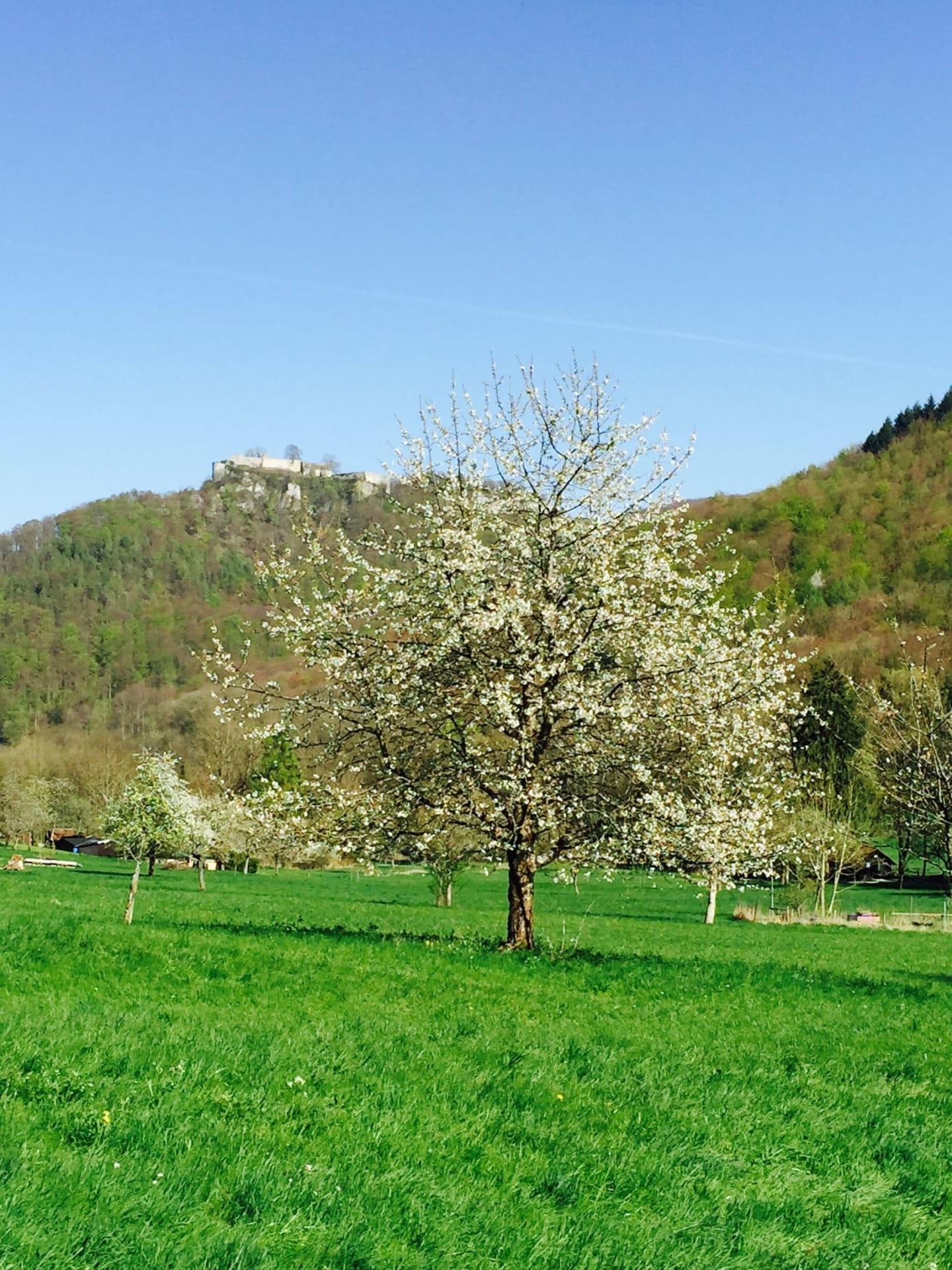 Wandern im Biosphärengebiet Schwäbische Alb